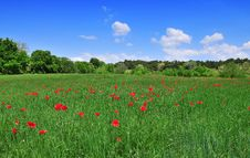 Free Filed Of Poppies Royalty Free Stock Image - 9525396