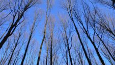 Free Blue Sky Forest Stock Photo - 9526300