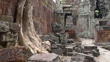 Free Ta Prohm, Angkor, Cambodia Stock Image - 9526431