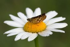 Free Butterfly And Flower Stock Photography - 9527022