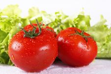 Free Tomato Royalty Free Stock Images - 9527409