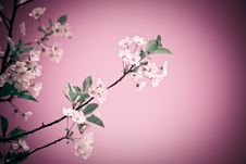 Free Fantasy Blossom Royalty Free Stock Images - 9527879