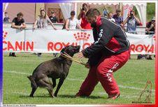 Free JOKER ROUGE BHM BOUZIDI NABIL SUCY EN BRIE 312,950 -5557 Stock Photography - 95220192
