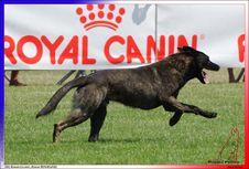 Free JOKER ROUGE BHM BOUZIDI NABIL SUCY EN BRIE 312,950 -5487 Royalty Free Stock Photos - 95220208