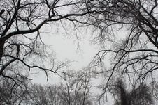 Free Tree Branches Stock Photos - 95220513