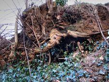 Free Plant, Wood, Twig, Vegetation Stock Image - 95220531