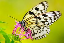 Free Close-up Of Butterfly Pollinating Flower Stock Photos - 95271523