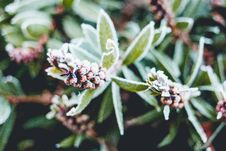 Free Frost On Plants Royalty Free Stock Photography - 95271607
