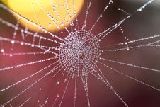 Free Cobweb With Dew Drops Royalty Free Stock Photography - 95271687