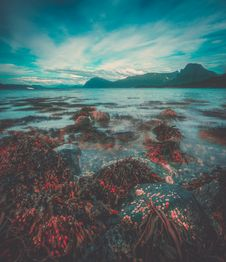 Free Seaweed On Rocks At Low Tide Royalty Free Stock Photos - 95271858