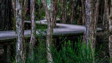 Free Nature Reserve, Ecosystem, Tree, Forest Stock Photos - 95283623