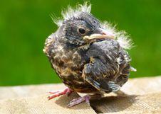 Free Bird, Fauna, Beak, Close Up Stock Image - 95284051