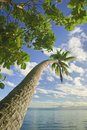 Free Island In South Pacific Stock Image - 9531621