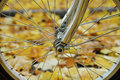 Free Bicycle Wheel Royalty Free Stock Images - 9535839