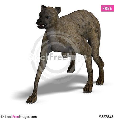 Free Hyena Royalty Free Stock Photo - 9537845