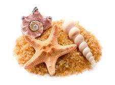 Starfish And Seashells Stock Photos