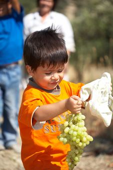 Free Child Collecting Grapes Royalty Free Stock Images - 9532259