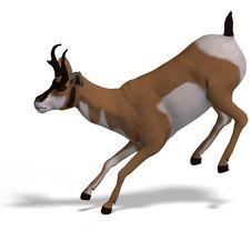 Free Antelope Royalty Free Stock Image - 9532386