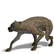 Free Hyena Royalty Free Stock Photo - 9532425