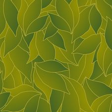 Free Green Leaves Royalty Free Stock Photos - 9534518