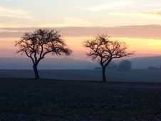 Free Sunset Winter Trees Royalty Free Stock Photography - 9536407