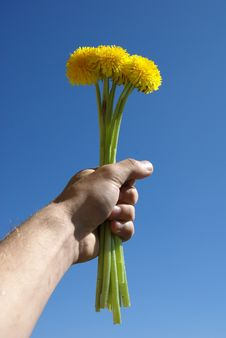 Free A Dandelion Is In A Masculine Hand Stock Images - 9536774
