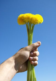 Free A Dandelion Is In A Masculine Hand Stock Photos - 9536783