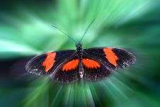 Free Magical Butterfly Royalty Free Stock Image - 9537406