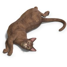 Free Cat Stock Photos - 9537823