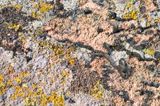Free Moss And Lichen On Granite Stone Stock Images - 9538544