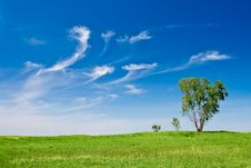 Free Three Trees Landscape Royalty Free Stock Photography - 9538717