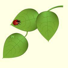Free Funky Ladybug Stock Photography - 9539372