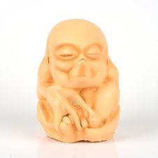 Free Embryo Stock Photos - 9539603