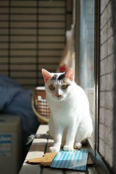 Free Cat, Felidae, Carnivore, Whiskers Stock Image - 95317751