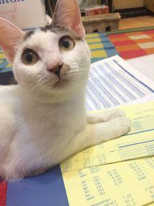 Free Cat, Carnivore, Felidae, Small To Medium-sized Cats Royalty Free Stock Image - 95317846