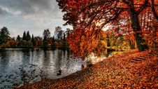 Free Pond With Autumn Leaves Stock Photos - 95317853