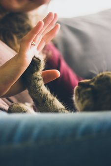 Free Person Giving High Five To Grey Cat Stock Photography - 95317882