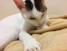 Free Cat, Comfort, Felidae, Carnivore Royalty Free Stock Photography - 95317887