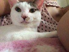 Free Nose, Cat, Felidae, Carnivore Royalty Free Stock Image - 95318006