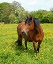 Free Pony Grazing Royalty Free Stock Photo - 9545215