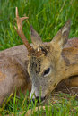 Free Deer Stock Photo - 9549780