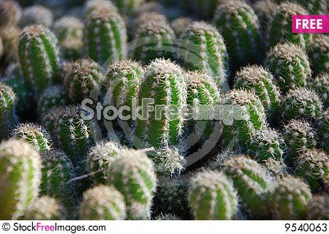Free Cactus Pad Stock Photos - 9540063
