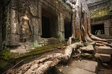 Free Ta Prohm Royalty Free Stock Photography - 9541777