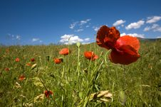 Free Poppies Stock Image - 9541891