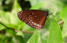 Free Black Butterfly Royalty Free Stock Photos - 9544108
