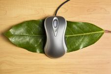 Free Computer Mouse On A Leaf Royalty Free Stock Photography - 9544227