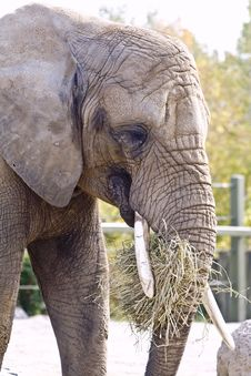Free Elephant Royalty Free Stock Photos - 9546408