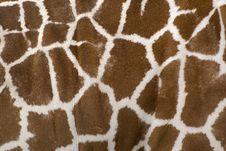 Free Giraffe Skin Royalty Free Stock Photo - 9546635