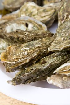 Free Atlantic Oysters On A Dish Stock Image - 9546671