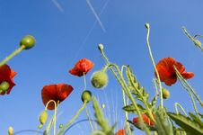 Free Poppy Field Stock Photo - 9546730
